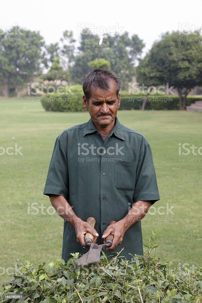 Indian gardener using garden shears on hedge royalty-free stock photo