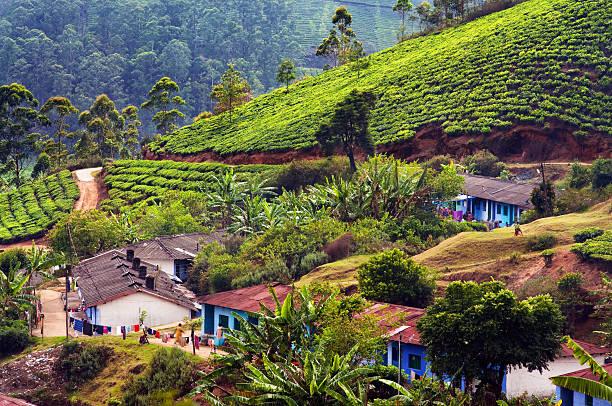 Indian houses within large tea plantations stock photo
