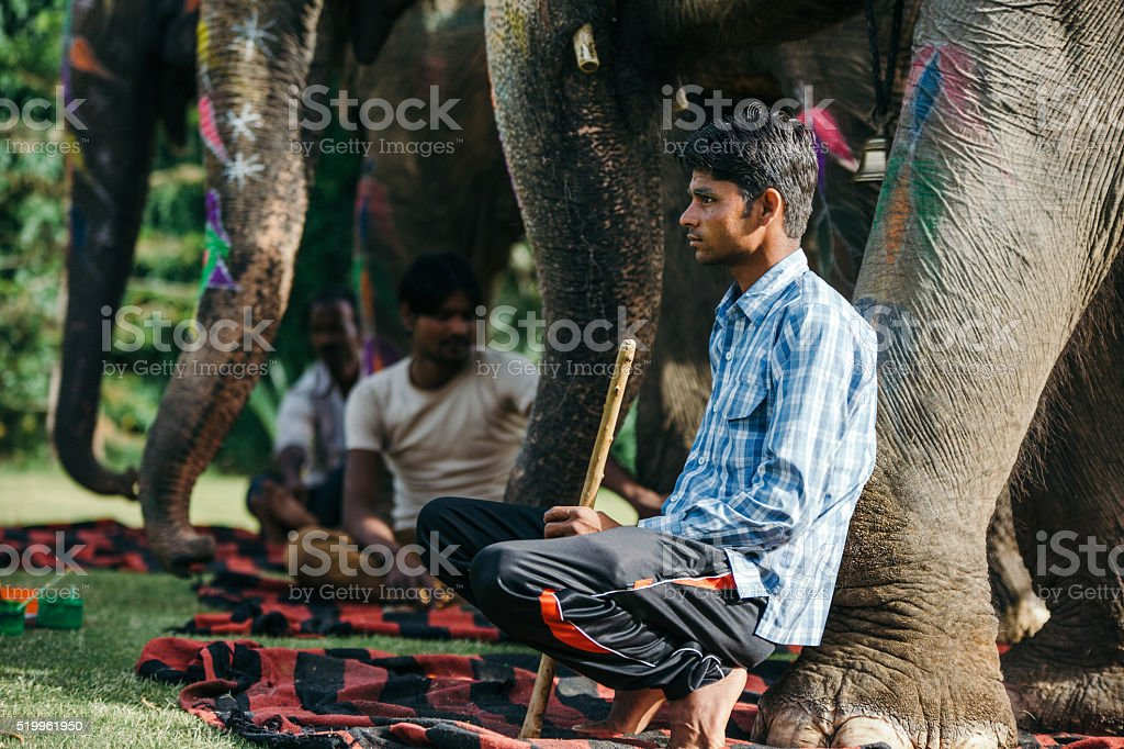 Indian mahouts and beautiful decorated elephants stock photo