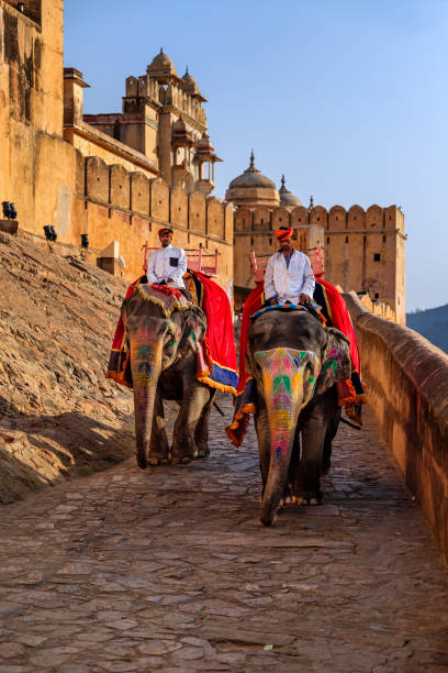 Indian man (mahout) riding on elephant near Amber Fort, Jaipur, India Indian man (mahout) riding on elephant outside Amber Fort, Jaipur, India. Amber Fort is located 13km from Jaipur, Rajasthan state, India. It was the ancient citadel of the ruling Kachhawa clan of Amber, before the capital was shifted to present day Jaipur. working animal stock pictures, royalty-free photos & images