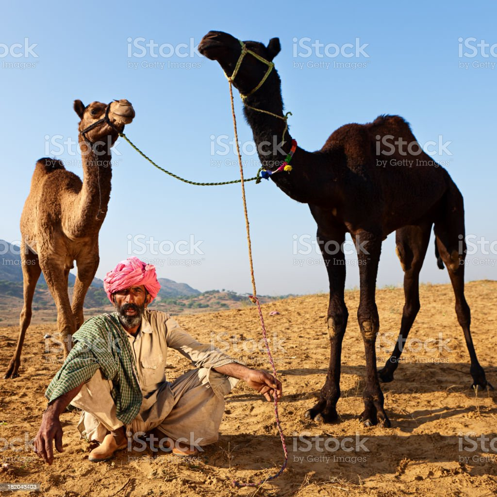 Indian man with camels during festival in Pushkar royalty-free stock photo