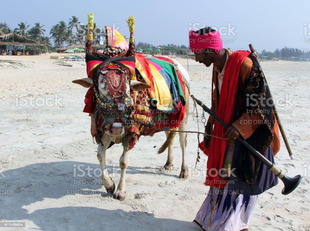Indiase man met heilige Indiase koe versierd met kleurrijke doek en sieraden op het strand van Zuid-Goa foto