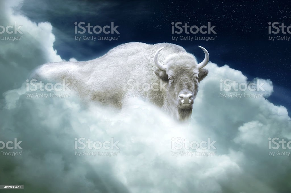 Bufalo indiano bianco luminoso - foto stock