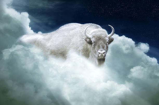 indian mystic - white buffalo stock photo