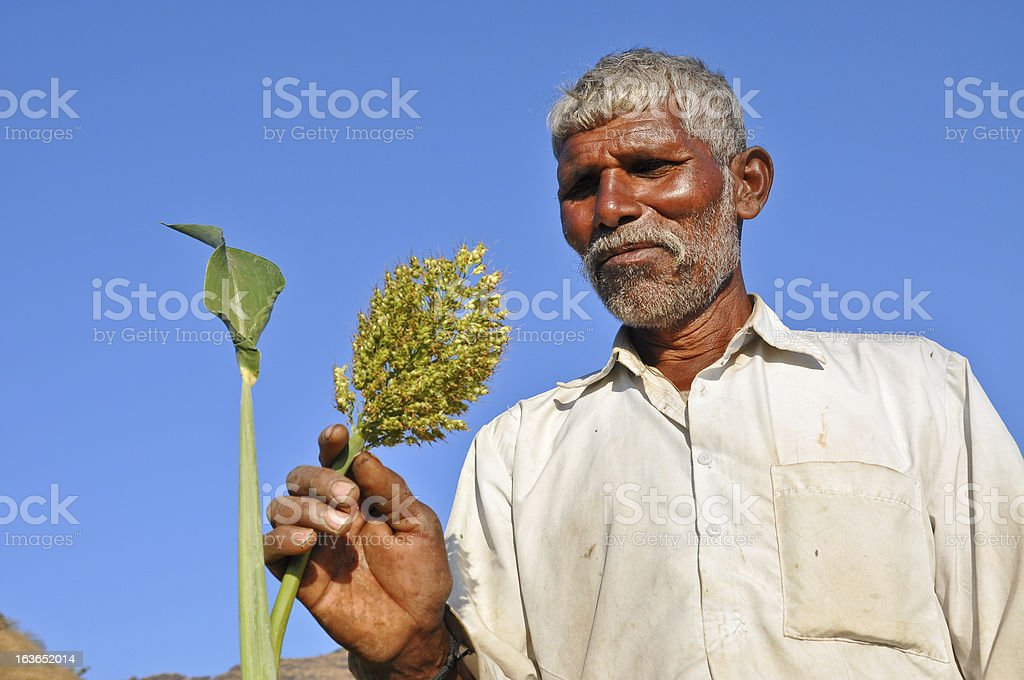 Indian old man happy with the crop royalty-free stock photo