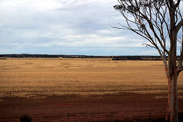Indian Pacific train view