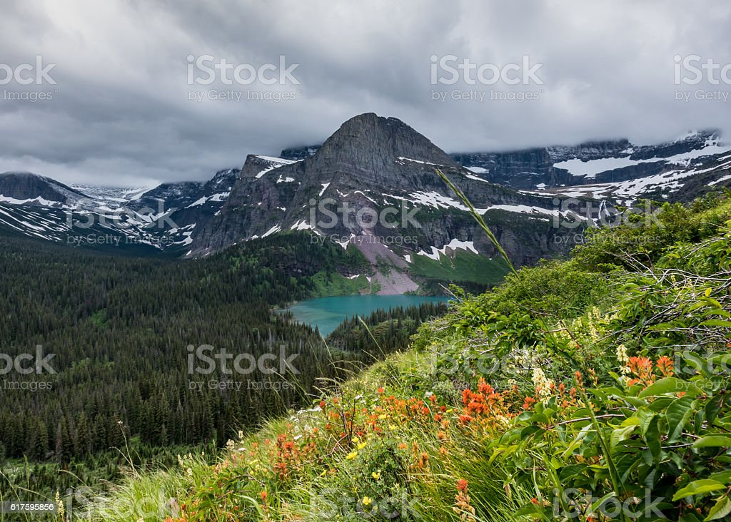 Indian Paintbrush Bloom on Mountain Side Above Grinnell Lake stock photo