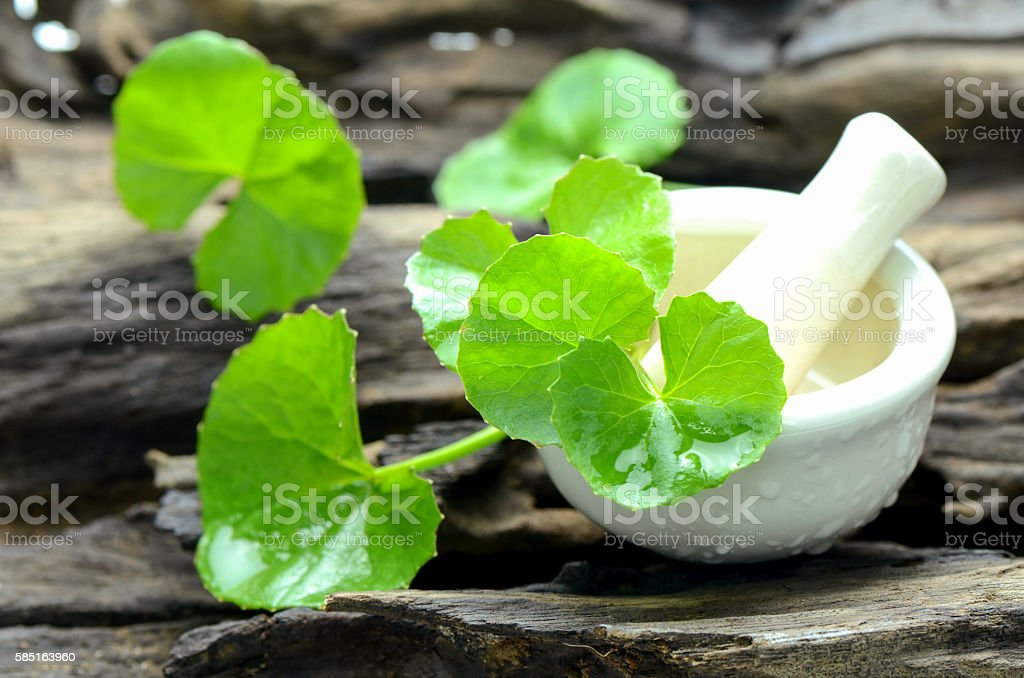 Indian pennywort, brain tonic herbal plant. stock photo