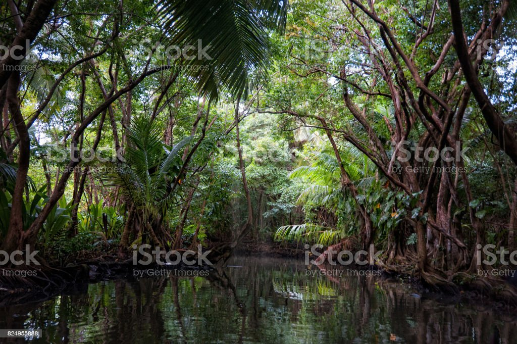Indian River, Dominica stock photo