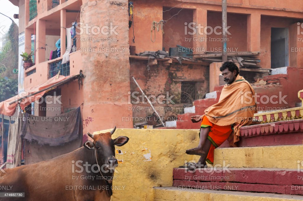 Indian Sadhu with the sacred cow on the steps stock photo