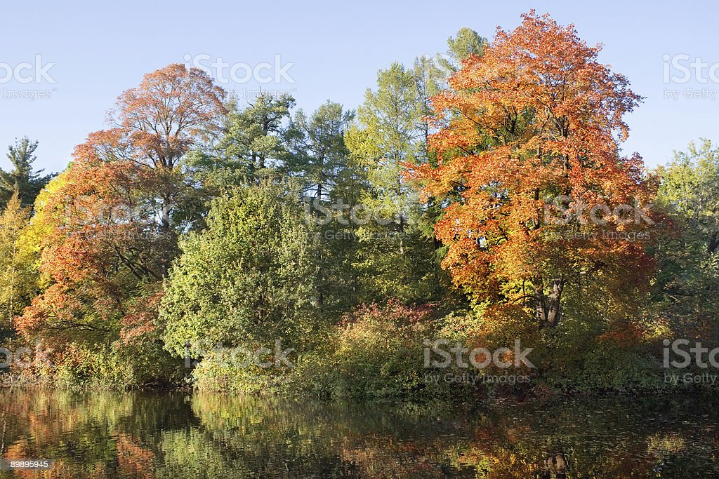 Indian summer 4 royalty-free stock photo
