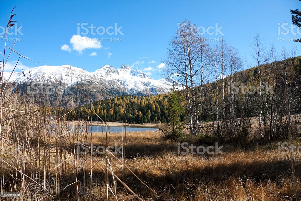 Indian Summer and Snow Mountains at Stazer Lake, Engadin, Switzerland. royalty-free stock photo