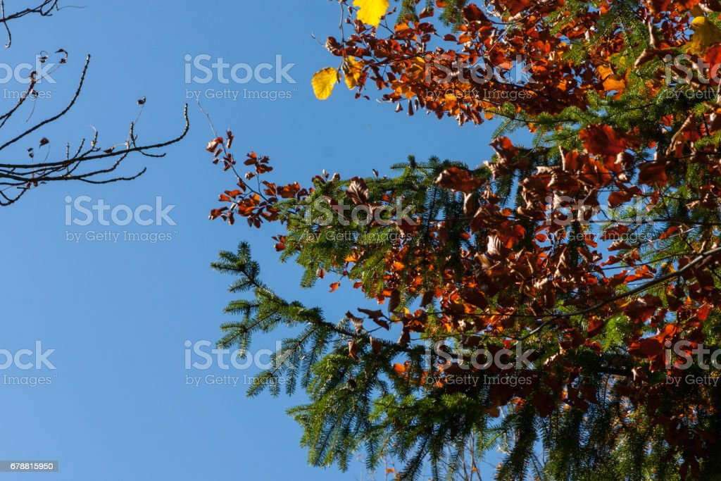indian summer in south germany photo libre de droits