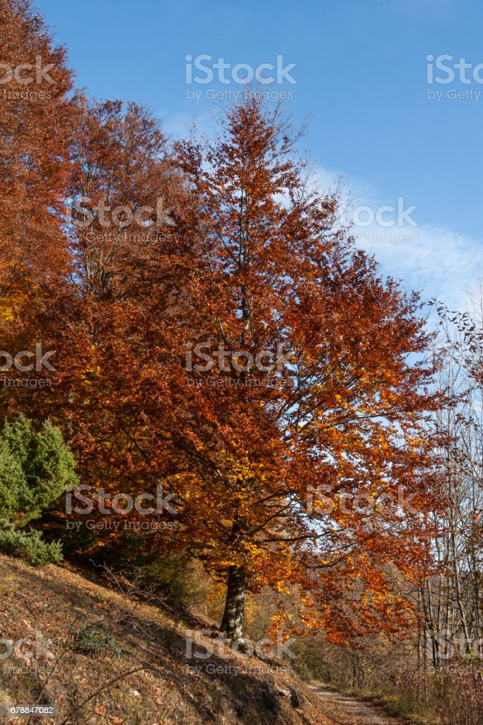 indian summer in south germany royalty-free stock photo