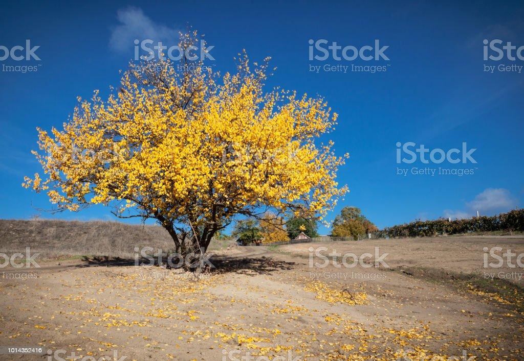 Indian summer landscape stock photo