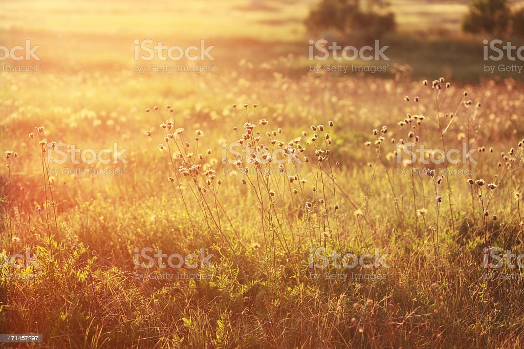 Indian summer meadow royalty-free stock photo