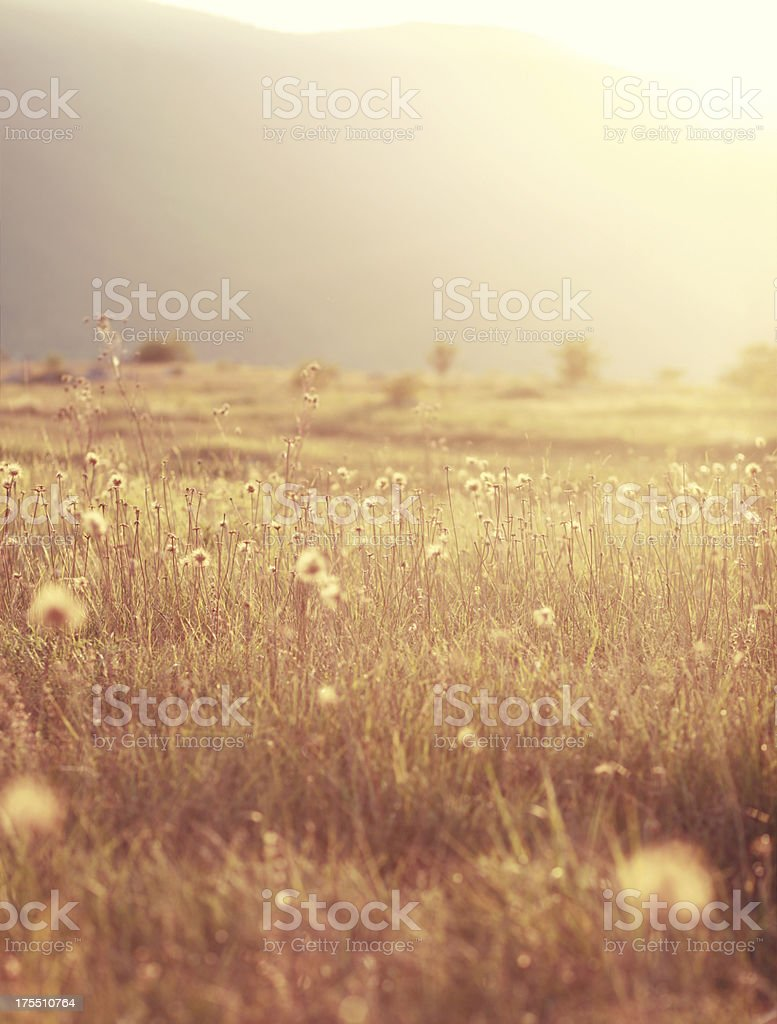 Indian summer nature meadow stock photo