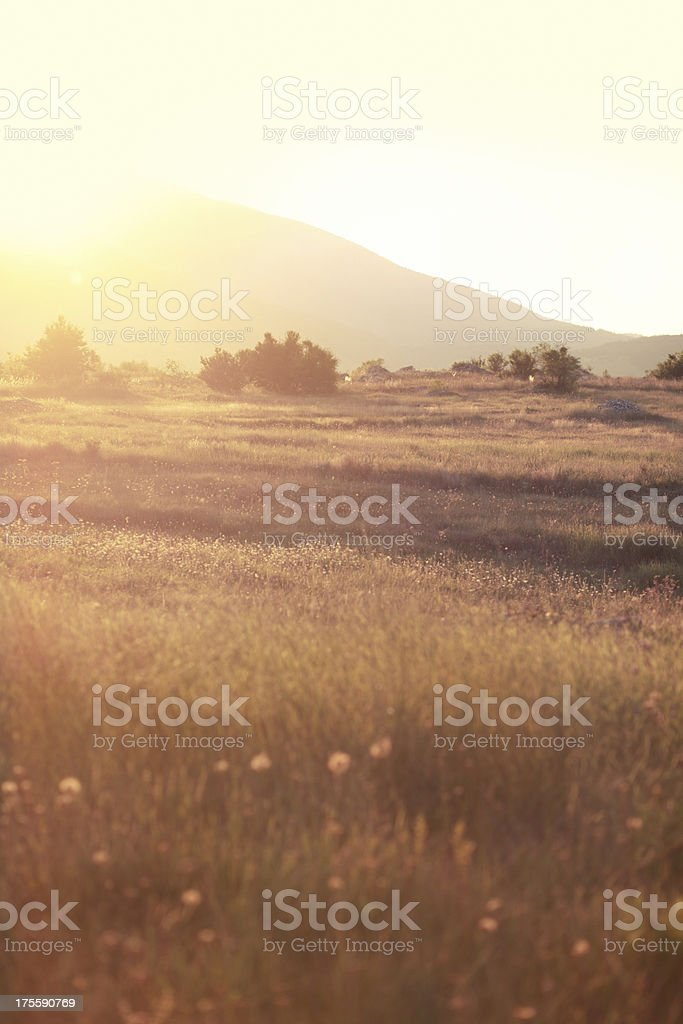 Indian summer nature meadow royalty-free stock photo