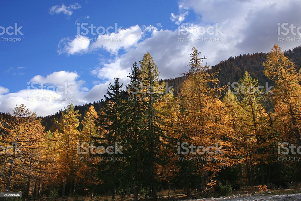Indian summer near Mont Blanc royalty free stockfoto