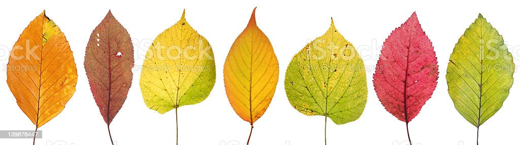 indian summer two stock photo