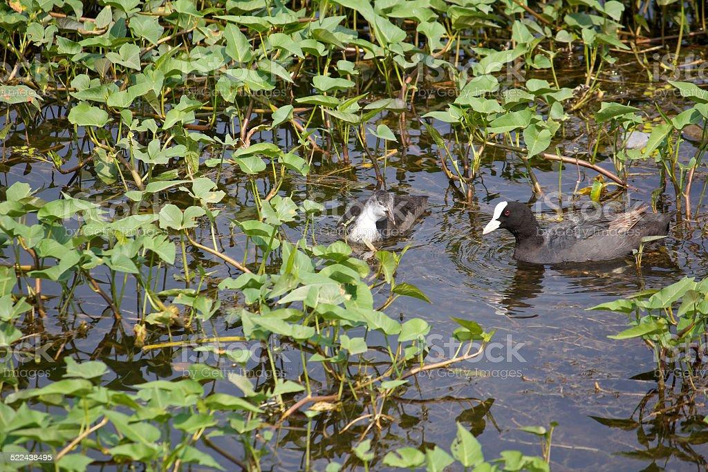 Indian waterbirds stock photo
