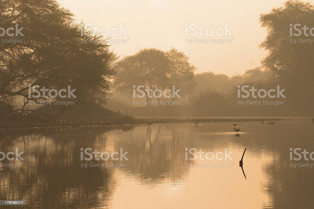 Indian wetland royalty-free stock photo