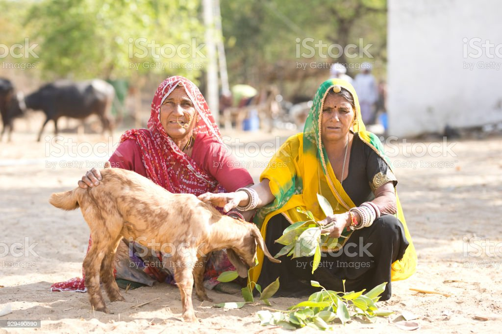 Indian Women Feeding Small Goat Stock Photo - Download Image
