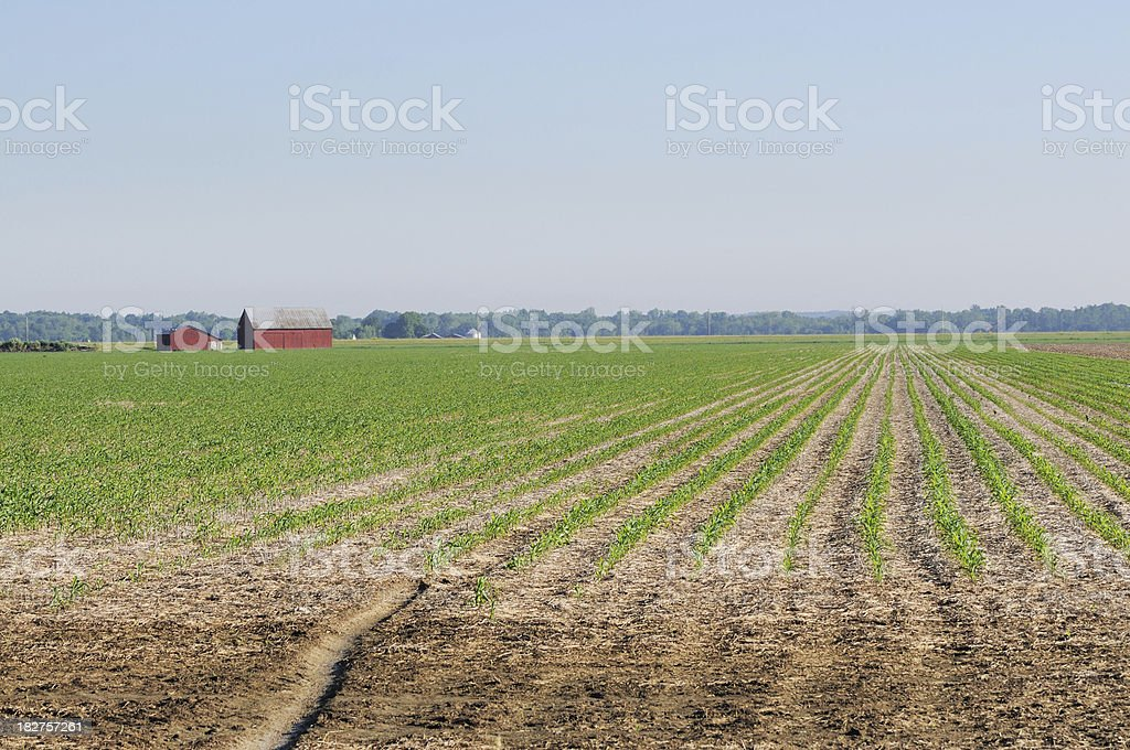 Indiana Agriculture Cornfield Plant Rows, Barn and Farm in Spring stock photo