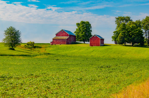 Indiana farm  on a hill with springtime crop (P) stock photo