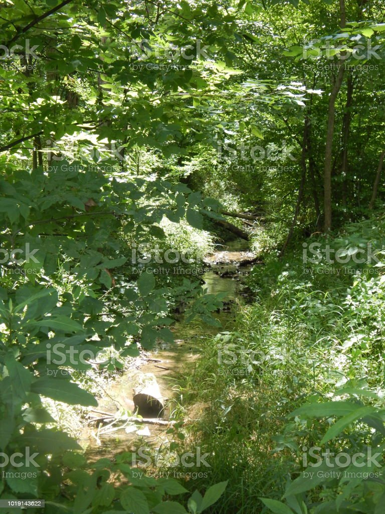 Indiana Forest Creek Summer Stock Photo - Download Image Now - iStock