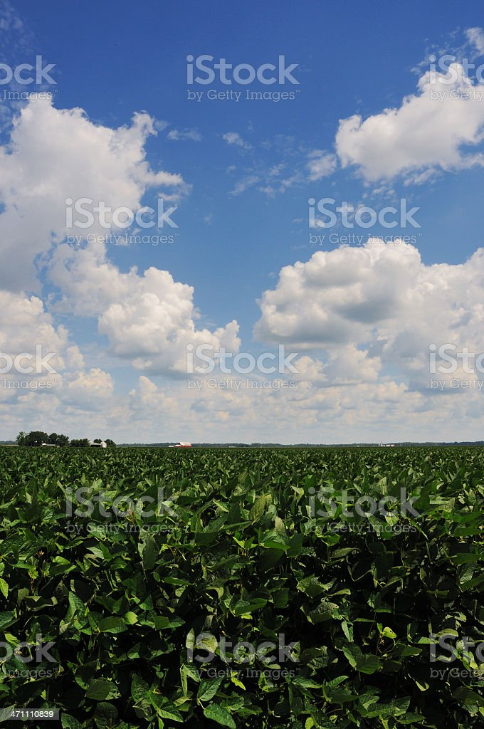 Indiana Soybean Field and Farm stock photo