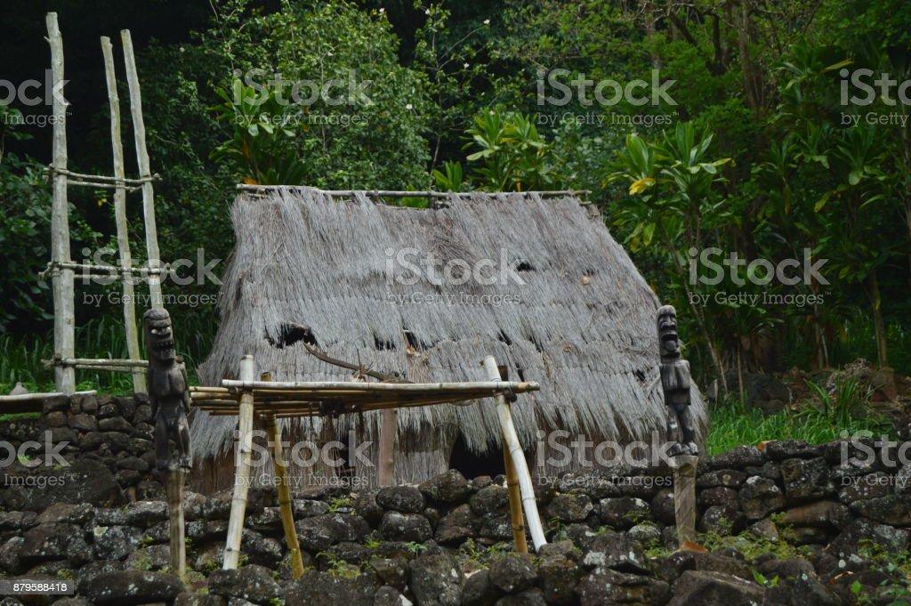 Indigenous Payoza Hawaiian stock photo