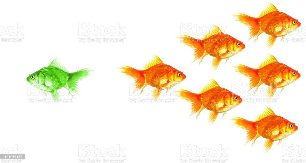 individual goldfish stock photo