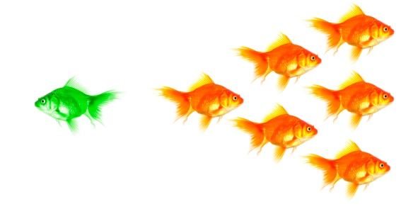 Individual Goldfish Stock Photo - Download Image Now