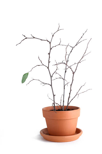 individual growth - dead plant stock photos and pictures