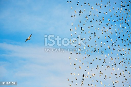 istock Individuality concept, birds in flight 911671594