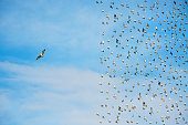 Individuality concept, birds in flight,