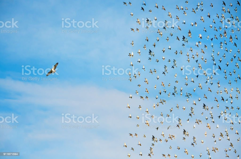 Individuality concept, birds in flight stock photo