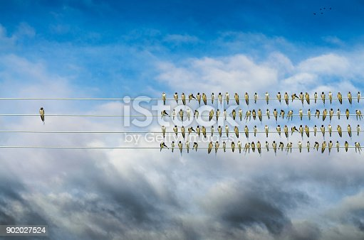 istock Individuality concept, birds on a wire, alone against mass 902027524
