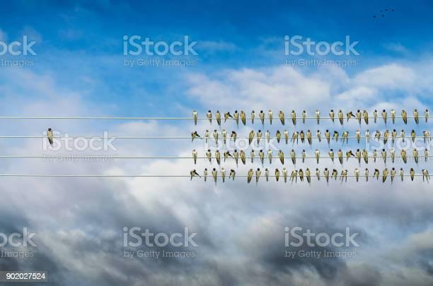 Individuality concept birds on a wire alone against mass picture id902027524?b=1&k=6&m=902027524&s=612x612&h=pnj8w1newoisu0ekol854tehtjdrnov2wljl73sgw1q=