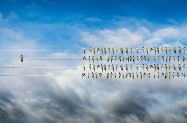 Individuality concept, birds on a wire, alone against mass stock photo