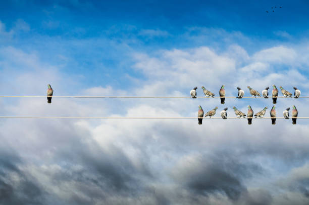 Individuality concept, birds on a wire, alone against mass
