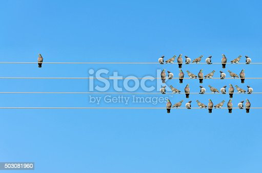 istock Individuality concept, birds on a wire 503081960
