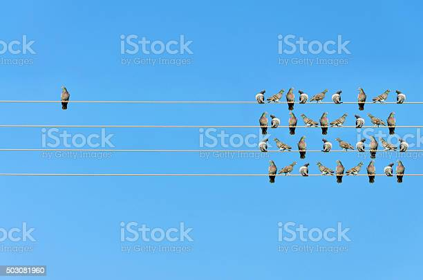 Individuality concept birds on a wire picture id503081960?b=1&k=6&m=503081960&s=612x612&h=uu75r y5fh6y bbhvu6sglhdrtbnt7ixsitycg8gvnu=