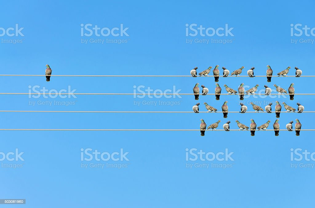 Individuality concept, birds on a wire stock photo