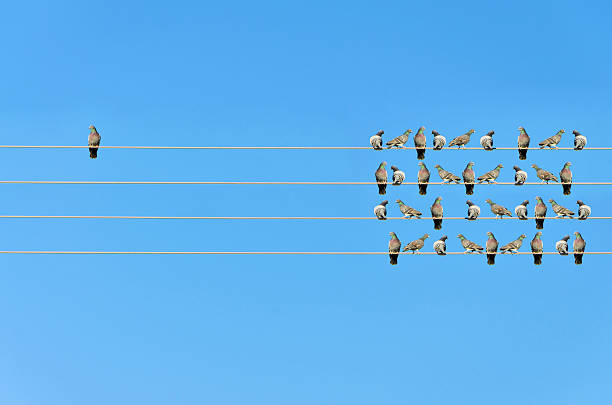 individuality concept, birds on a wire - independence stock photos and pictures