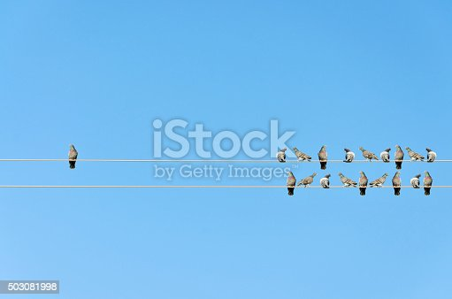 istock Individuality concept, birds on a wire 503081998