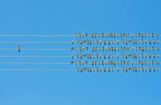 Individualidad concepto, pájaros en un cable - foto de stock