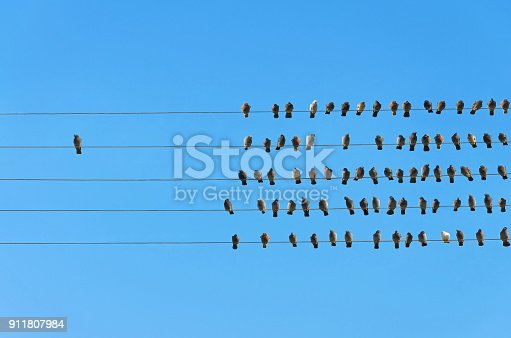 istock Individuality concept, birds on a wire 911807984