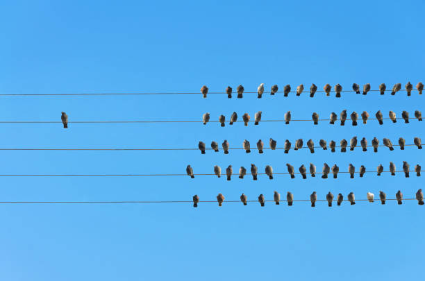 Individuality concept birds on a wire picture id911807984?b=1&k=6&m=911807984&s=612x612&w=0&h=francs3g7qjlpvsuotycl7yr624hbmohj148kzmtxaq=